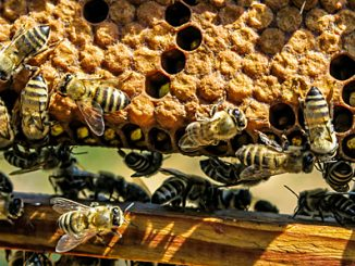 Bienen